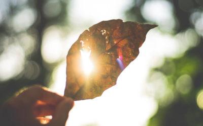 Cómo proteger tus cultivos del exceso de calor