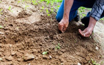 Los beneficios de la fertilización natural en las plantas