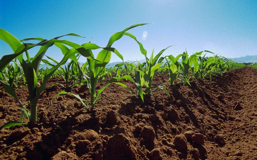 Cómo realizar un buen análisis del suelo para el cultivo