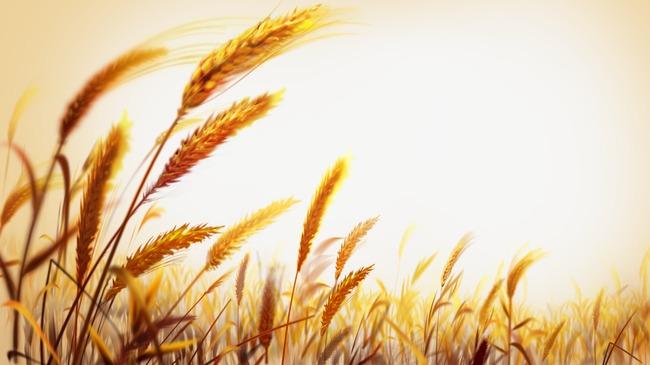 La guía definitiva de los cereales de invierno