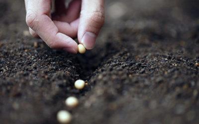 Una buena cosecha comienza con una buena semilla